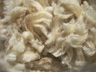 Shetlandxlincoln_fleece_2