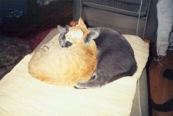 Owen & Rudy, In Love